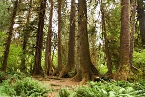 Ser ni trädet som en gång föll och dessa stammar började växa från?