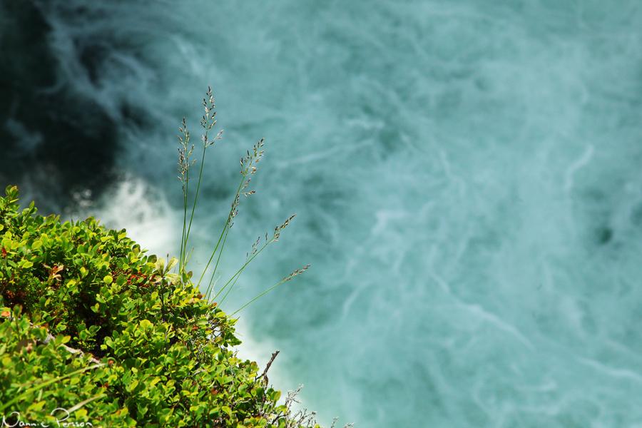 Fårsvingel (Festuca ovina). Den känner vi ju väl från hemma. Men titta vilken färg vattnet har!