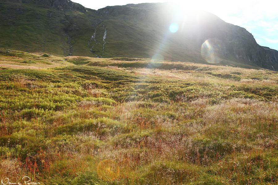 Om Gotland karaktäriserades av tulkört överallt, så var motsvarigheten här uppe kruståtel (DEschampsia flexuosa).