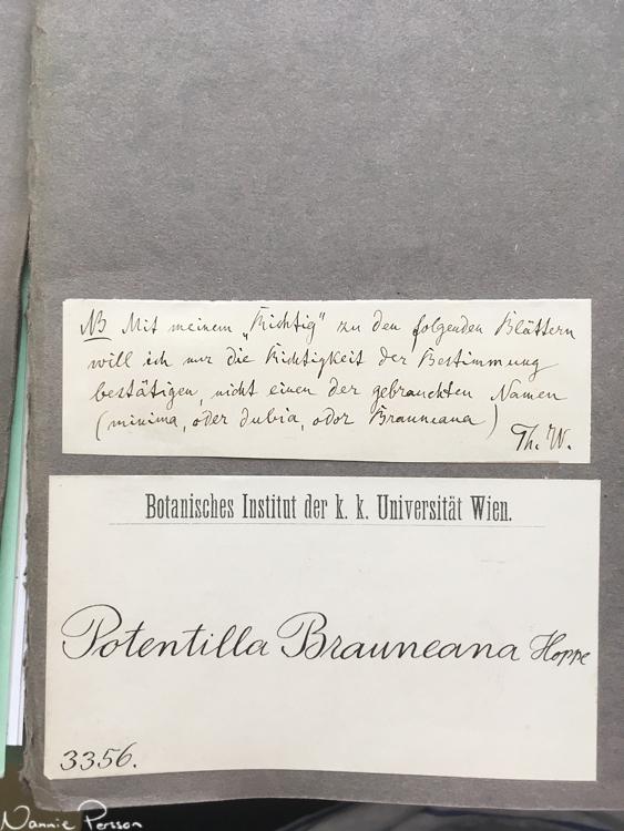 """Anteckning från Theodor Wolf. De ark han skrivit """"Richtig"""" på syftar till att det är rätt art, snarare än rätt gällande namn."""