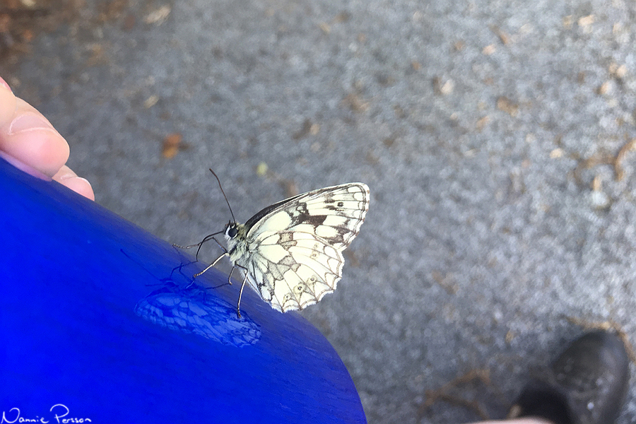 En liten vitfjäril (rätta mig om jag har fel) på min vattenflaska.